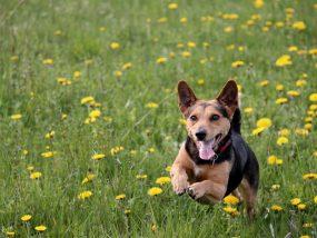 Dog running & having fun