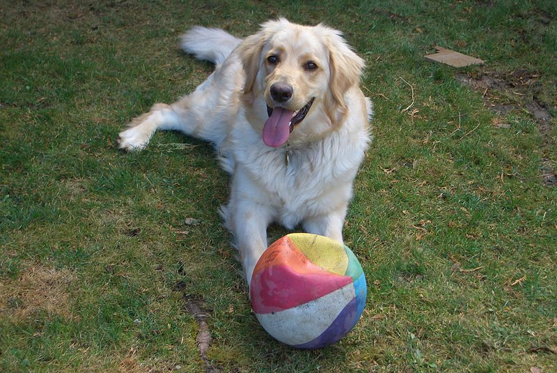Joey's Doggie Day Care - dog with ball