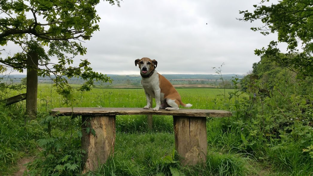 Jack Russell Sitting on Bench